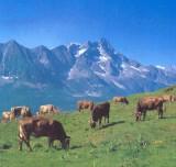pascolo_d_alta_montagna_large